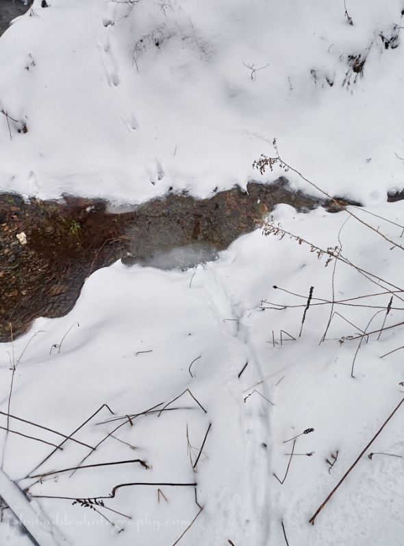 weasel-tracks