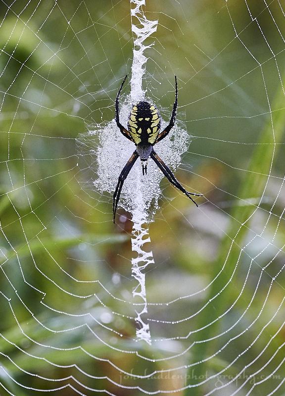 garden-spider-web