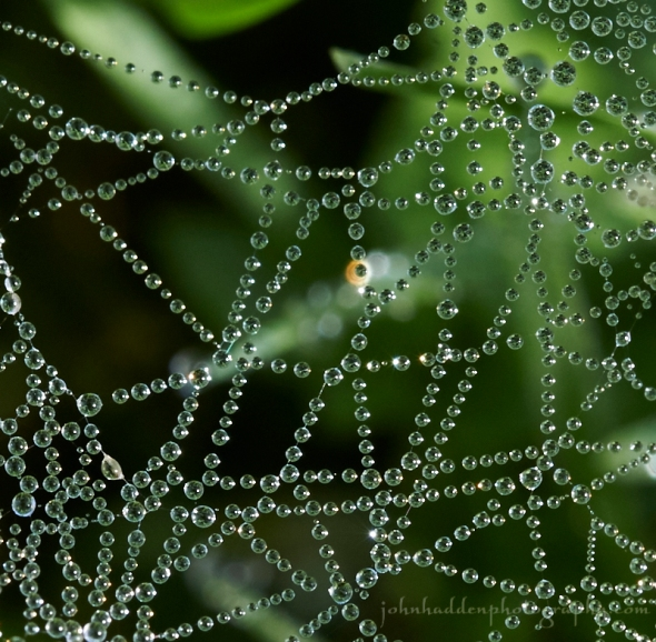 grass-web-dew