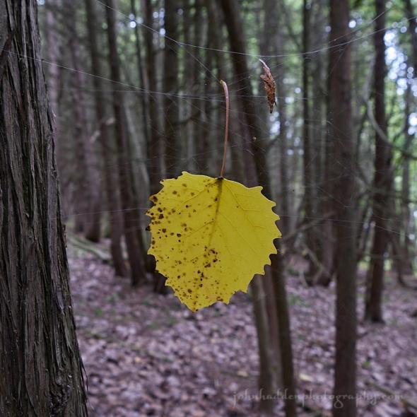 webbed-leaf