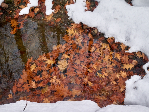 oak-leaves-water-snow