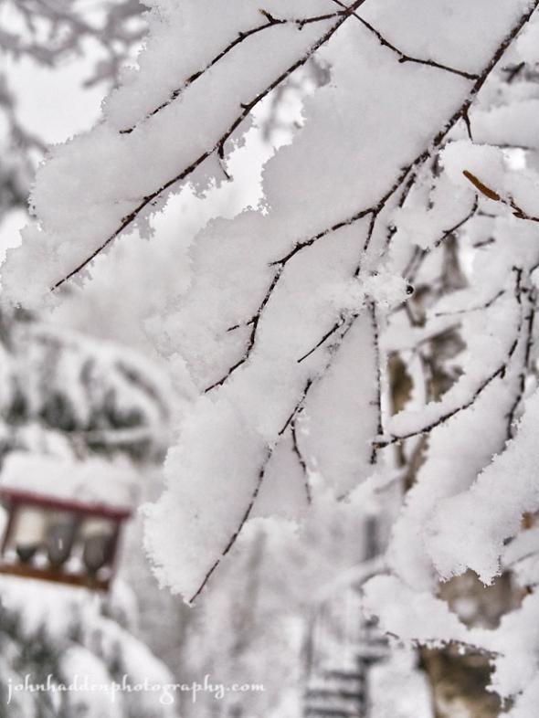 snow-twigs