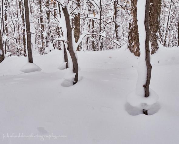 3-tree-snow