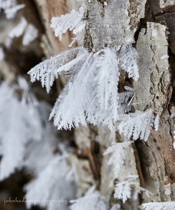 frost-bark