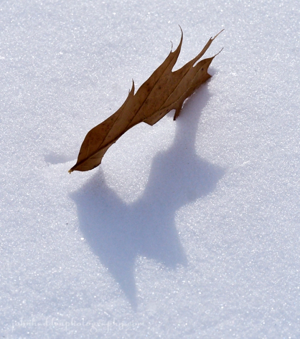 oak-leaf-snow