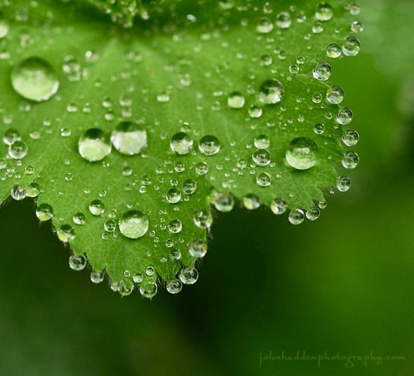 raindrops-ladies-mantel