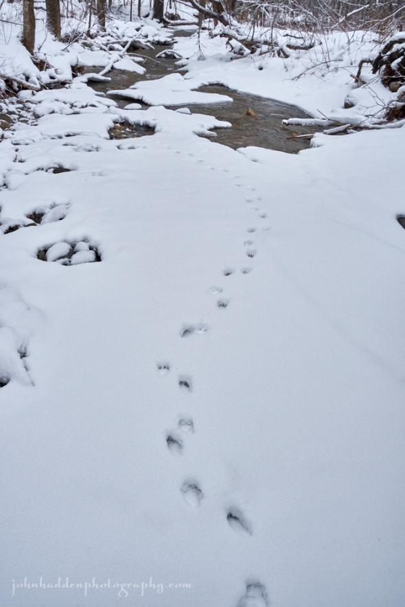 marten-tracks-1